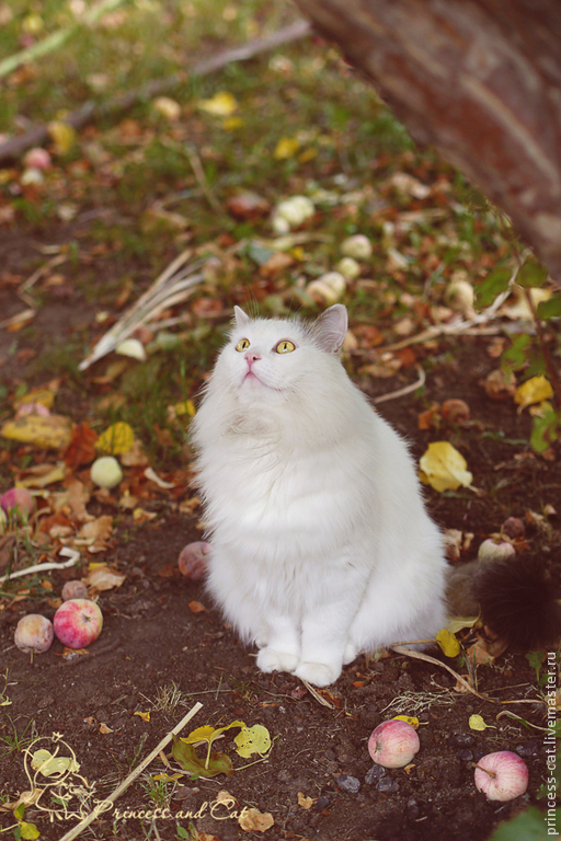фото кота, красивые фото