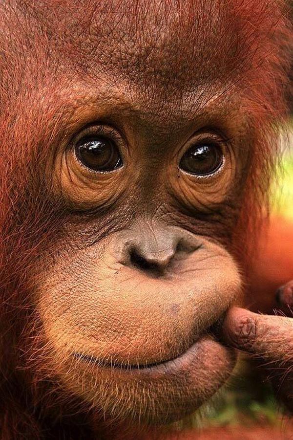 Доброе утро с обезьянкой картинки, приколы