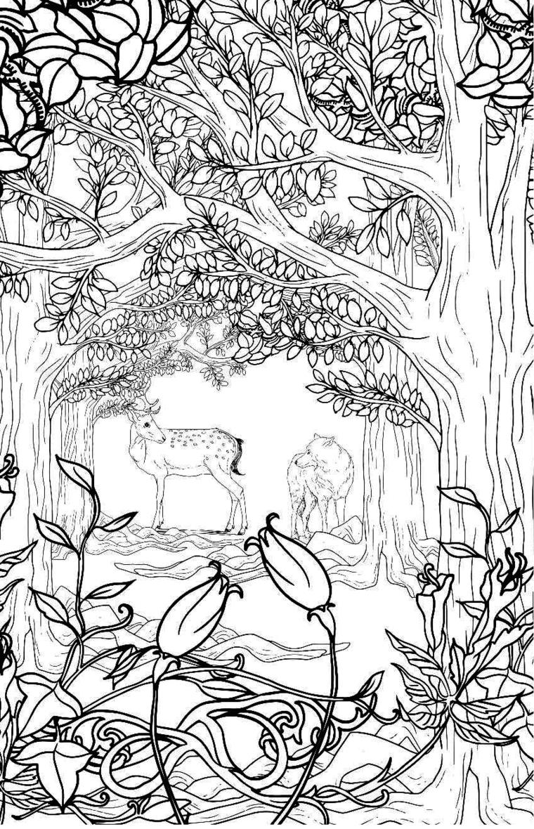 Волшебный лес картинки раскраска