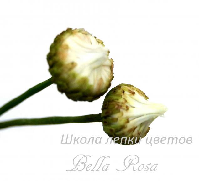 белла роза, мастер-класс по лепке