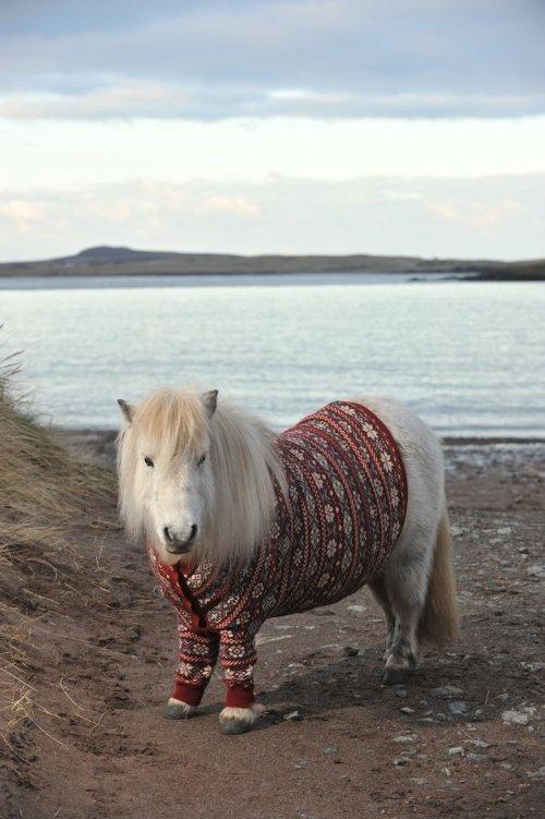 А пони - тоже кони!, фото № 4