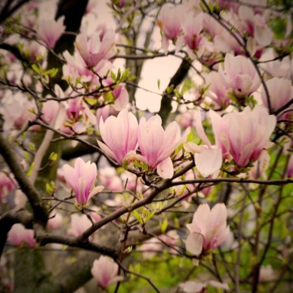 Весенний Париж, дыхание теплого ветра, фото № 10
