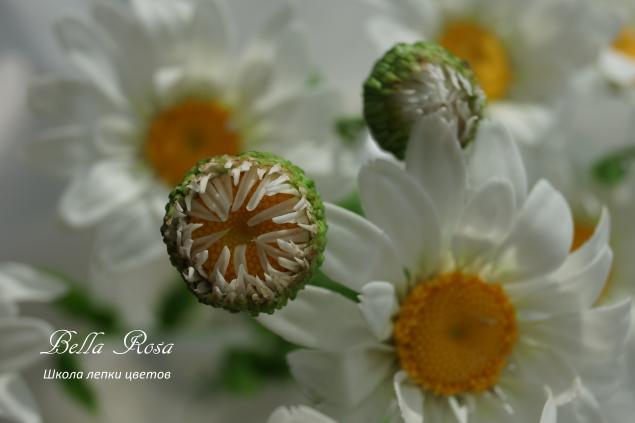 школа лепки цветов, лепка цветов, керамическая флористика, мастер-класс