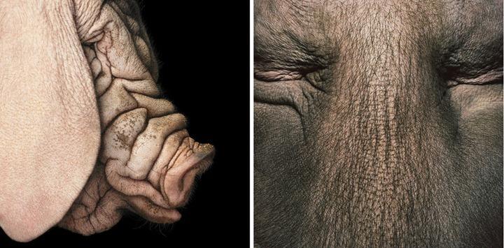 """""""Больше, чем животное""""– фотопроект Тима Флака"""