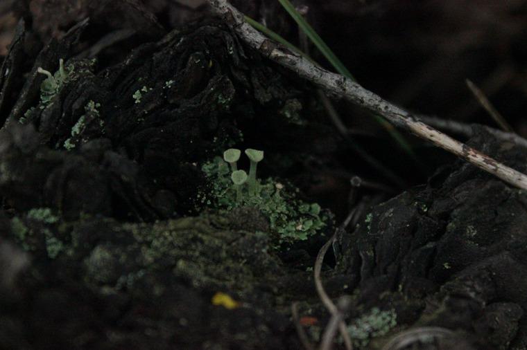 лесные тропинки, лес, всем добра