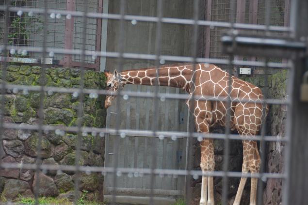 Дикий забег по Токио за 7 дней. День пятый. Зоопарк Уэно и детские магазины., фото № 49