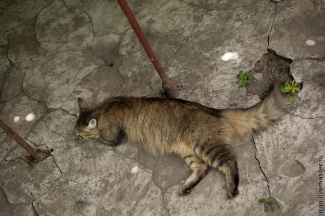 Лев Бонифаций или москвичка на ночь, фото № 153