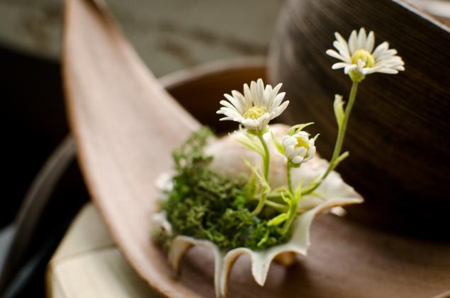 полевые цветы, цветы в ракушки
