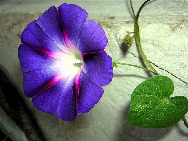 обучение цветы, елена григорьева цветы, брошь из кожи, кожаное цветоделие, купить брошь, цветочница, обучение цветы из кожи, обучение ирис, обучение, цветы