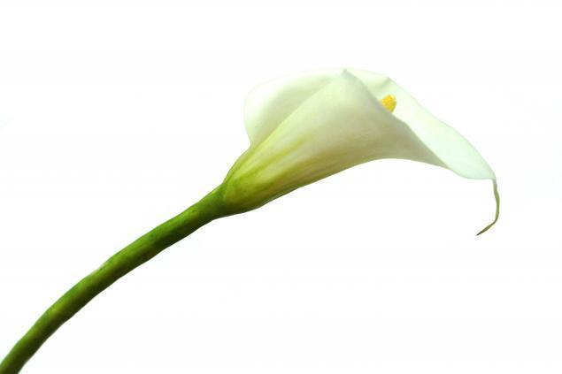 школа лепки цветов, лепка, флористика