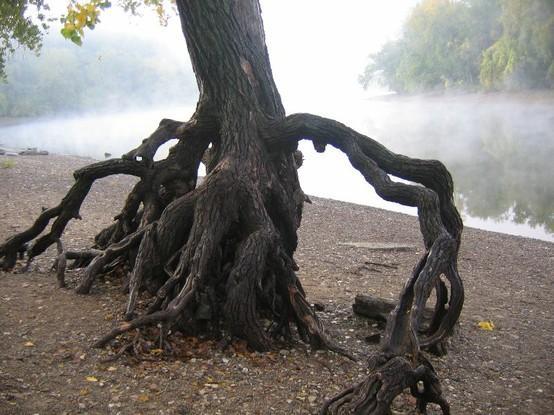 Bilo jednom jedno drvo - Page 2 120919164629