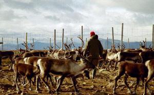 нить для плетения, серебряная нить, саами, плетение, скандинавское ремесло, серебро, нить для вышивания, скандинавия, оловянная нить, браслет из кожи