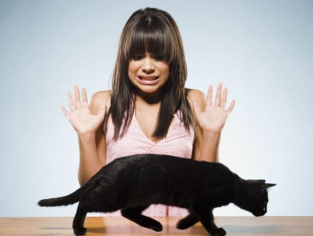 Кошка приметы для беременных