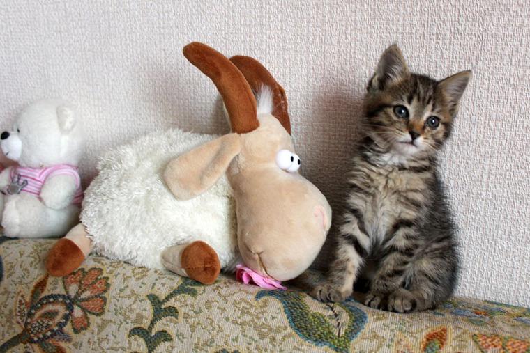 кот, добрые дела