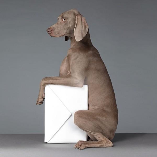 собаки модели работа