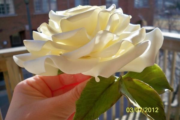 Цветы любовь женщина стихи