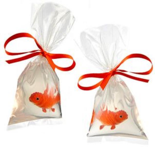 Рыбка в подарок