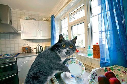 фотошоп кот