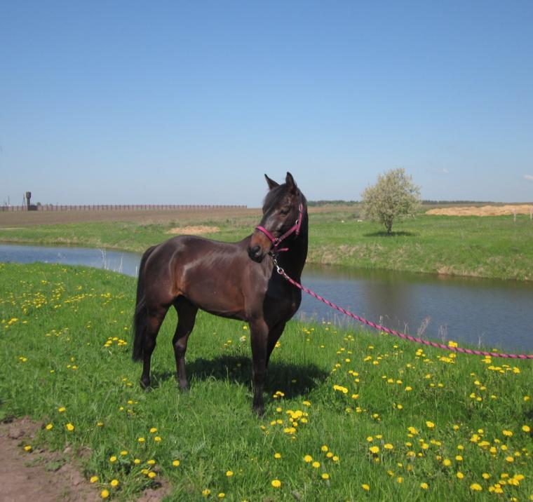 акварель, работа на заказ, портрет по фото, конь
