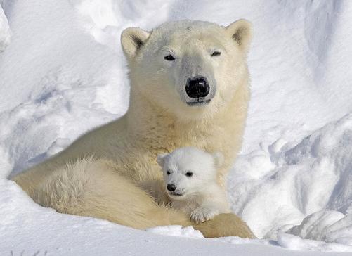 день полярного медведя, зимние виды спорта