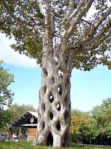 Bilo jednom jedno drvo - Page 2 120919173853