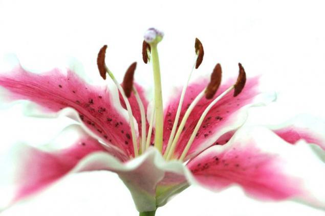 лепка цветов, гладиолус, холодный фарфор