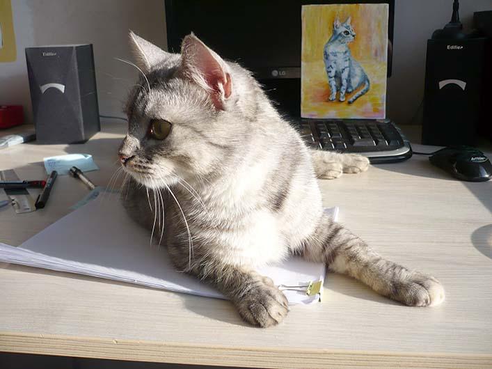 портрет домашнего любимца, кошечка котенок котик