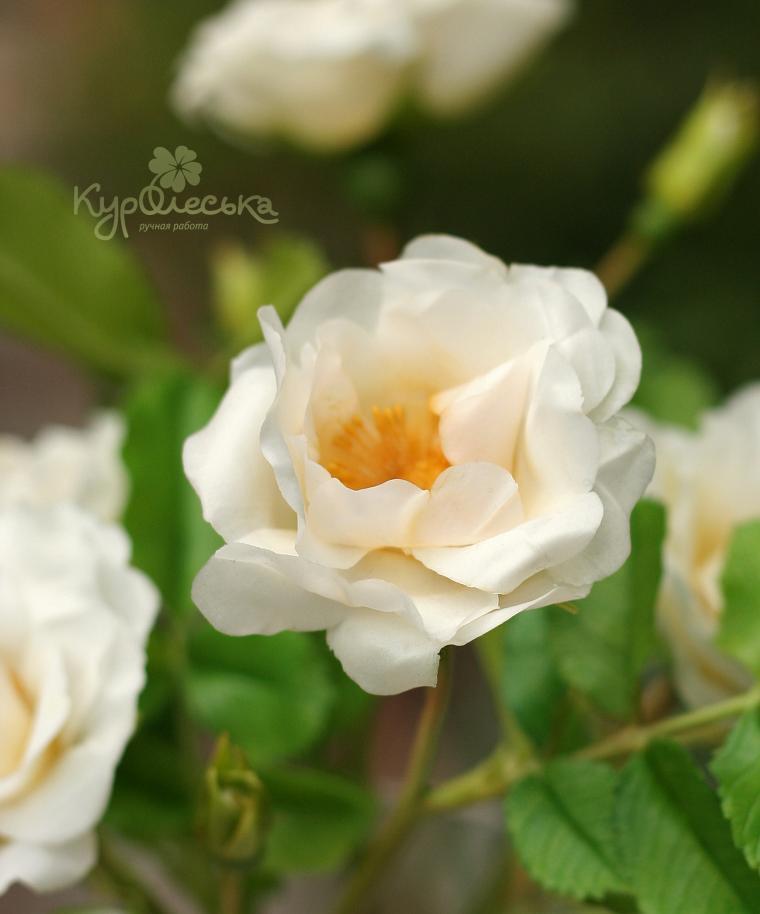 цветы ручной работы, лепим сами цветы, мастер класс шипоуник
