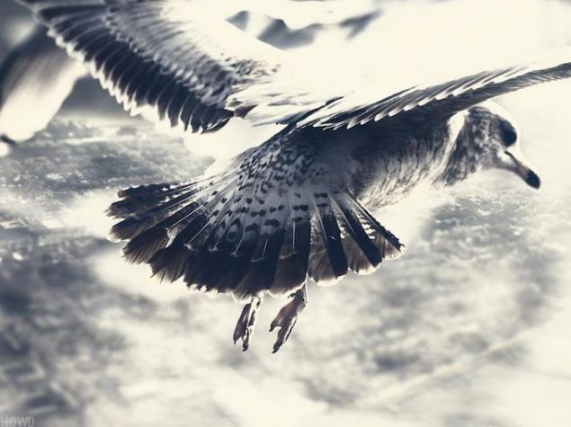 «Гордый Странник» фотографа Говарда Лау, фото № 6
