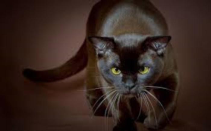 Если черный кот дорогу перейдет текст песни