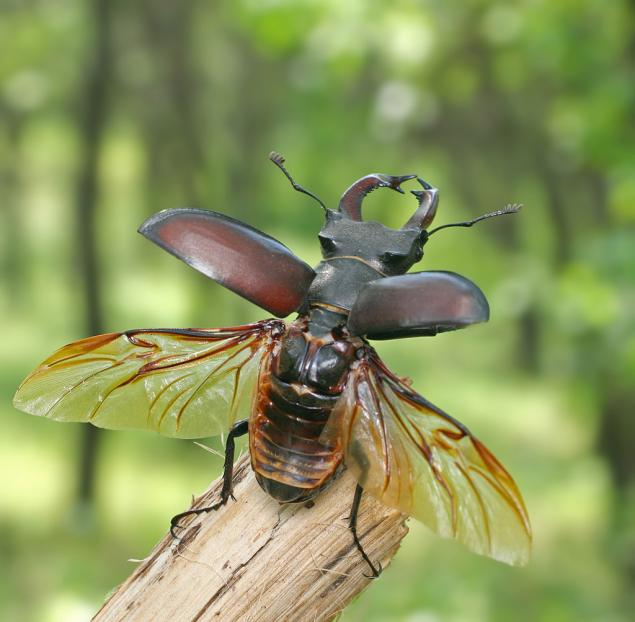 драгоценные насекомые подборка ювелирных украшений журнал