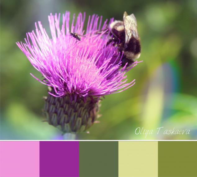 цветовые сочетания, фотодизайн