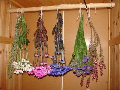 сушка цветов, как правильно сушить, цветы своими руками, растения, совет, полевые цветы, природные материалы, композиции, украшение интерьера