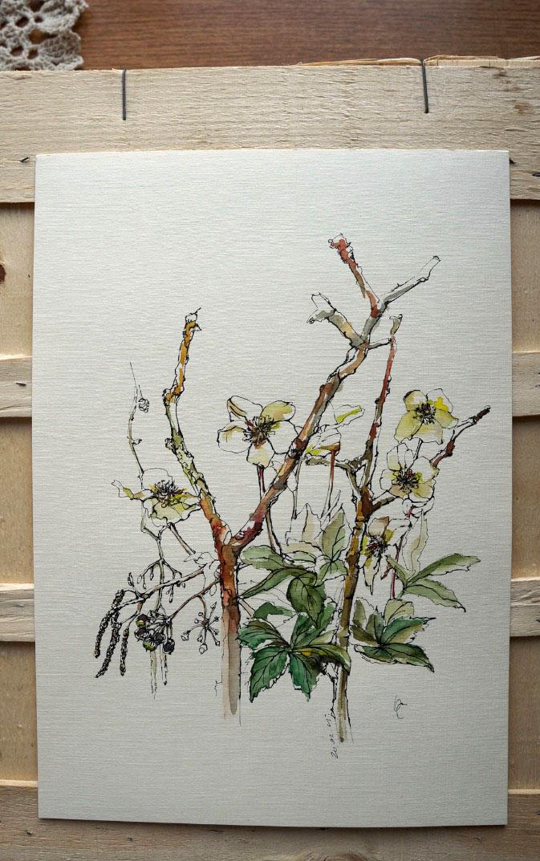 тюльпан, рисунок