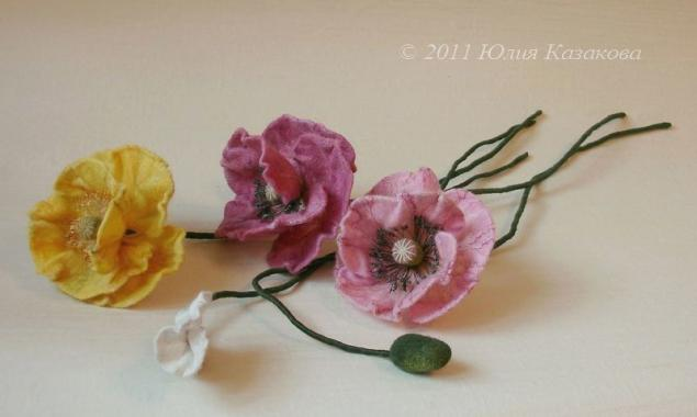 цветы, клевер