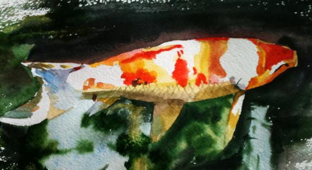 рыбки, обучение живописи, акварель, карпы, карпы кои, натали котова, пленэр