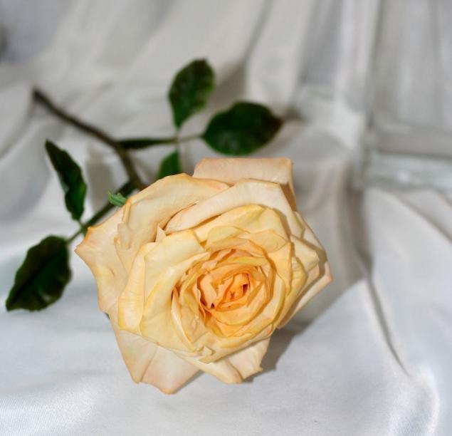 Цветы-это состояние души!, фото № 13