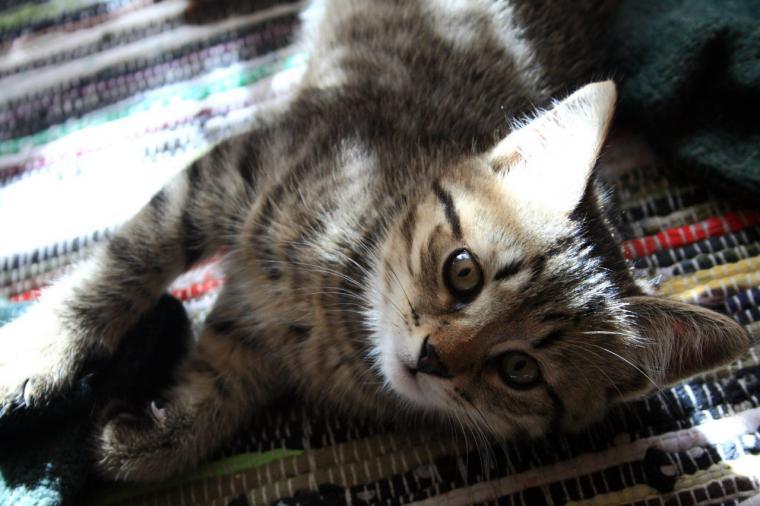 ищем дом, помощь, помощь животным, котик, кошка, животные, котенок, домашние животные, помогите, ищем дом своими руками