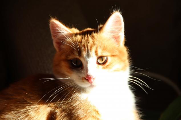 кот, вдохновение, персональные записи