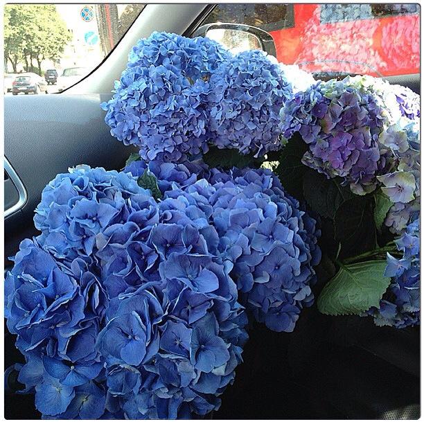 цветы, savaflowers, свадебный декор, цветы живые