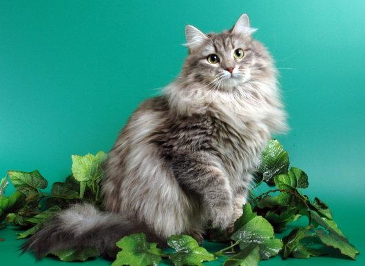 кошки кошечки котята