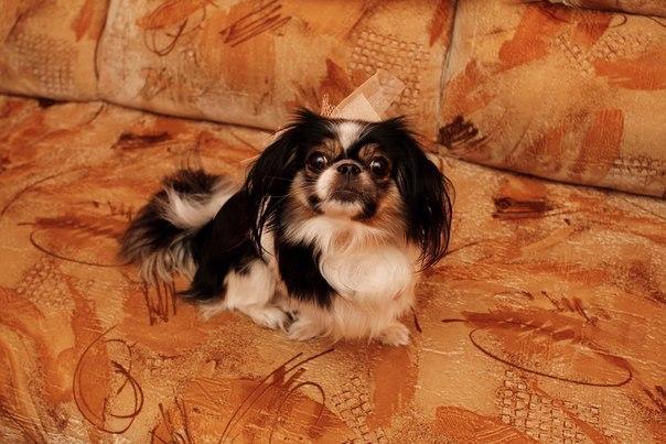 Собачий шарж, фото № 10