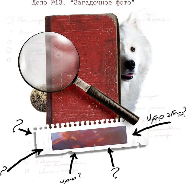 загадка самоеда, загадка, самоед, расследование, игра, угадайка, дело самоеда, игра с призом, приз, розыгрыш, vincento, акция vincento