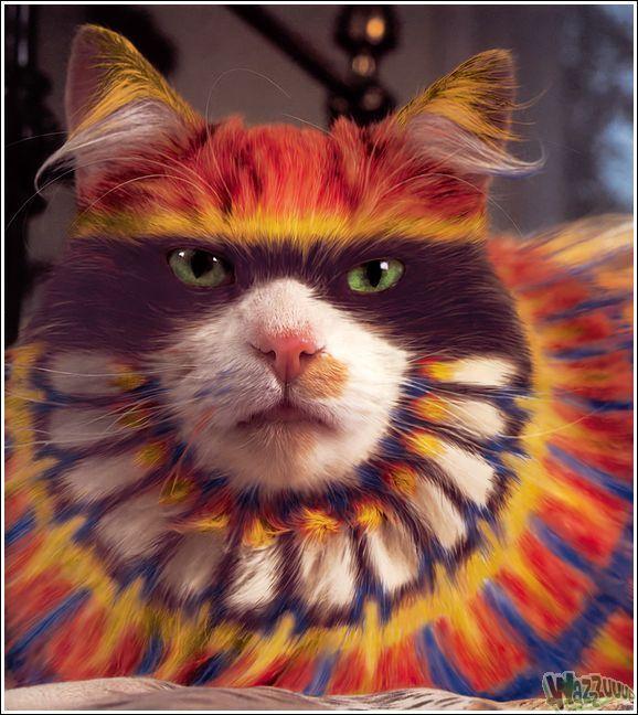 Зачем красить кошек?, фото № 4