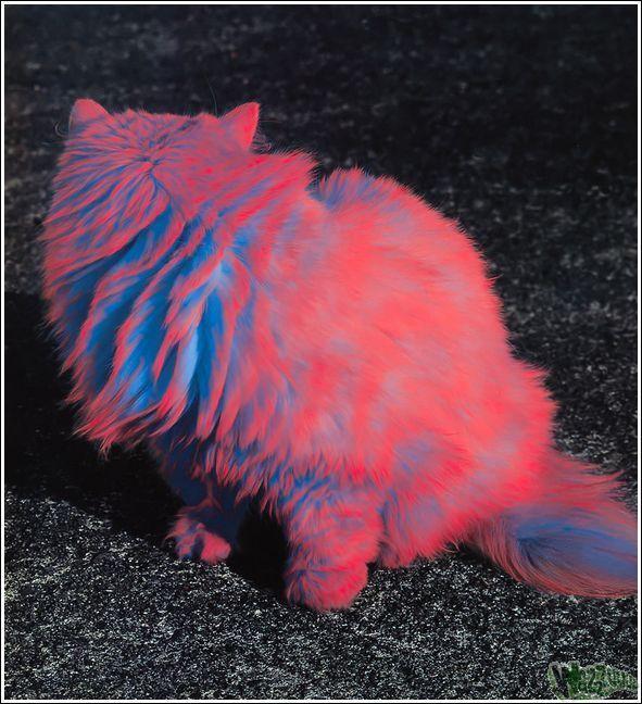 Зачем красить кошек?, фото № 34