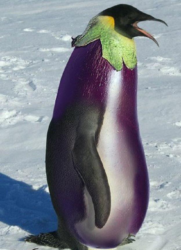 пингвин с арбузом картинки этого, пень