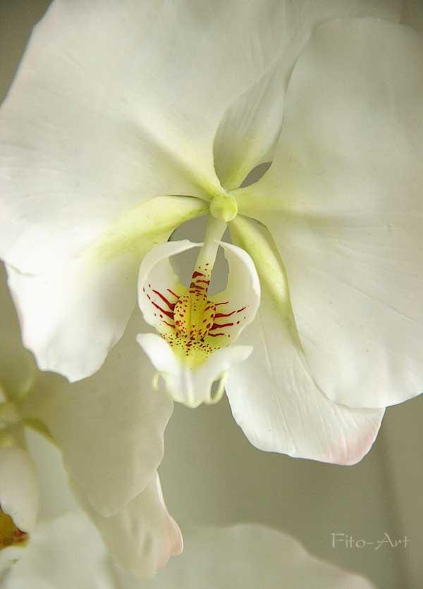как слепить орхидею
