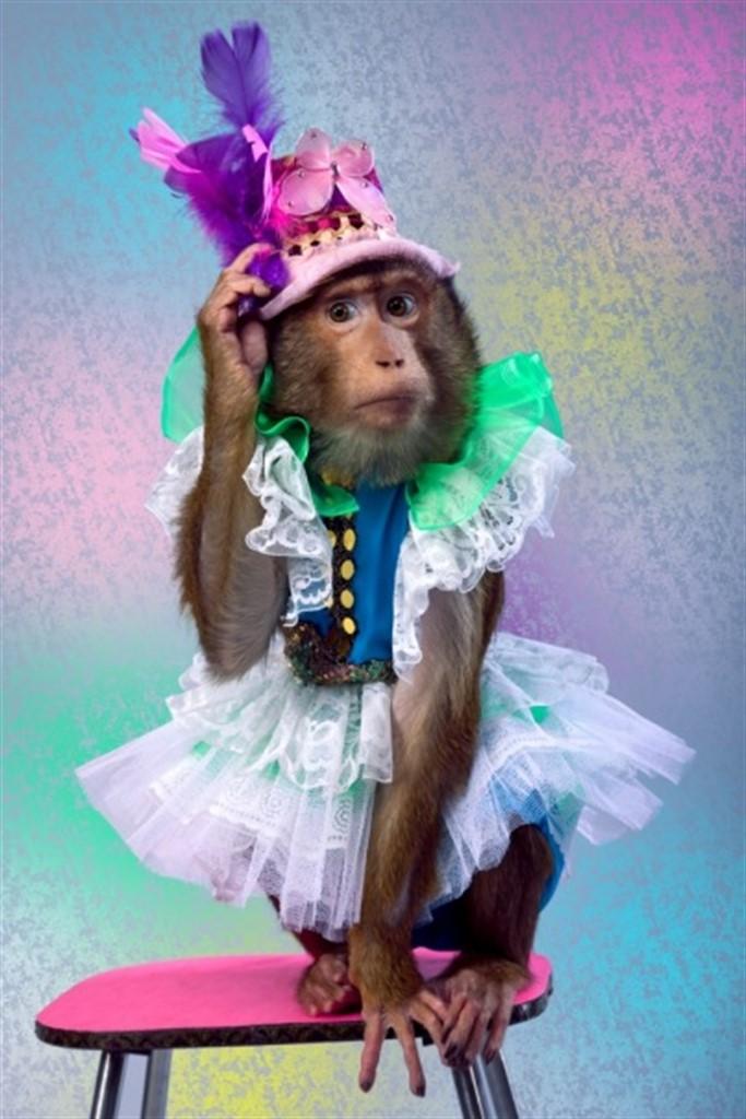 нарядная обезьянка картинки сожалению