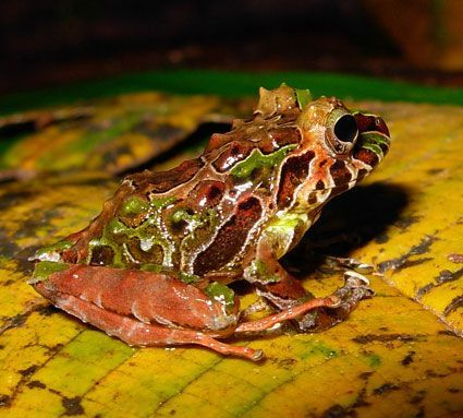 брошка с лягушкой