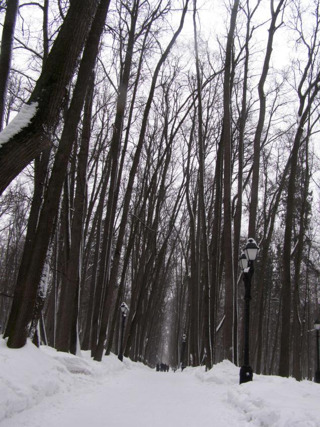 Царицыно в зимнем ракурсе., фото № 14